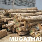 ท่อนไม้สักสำหรับงานไม้