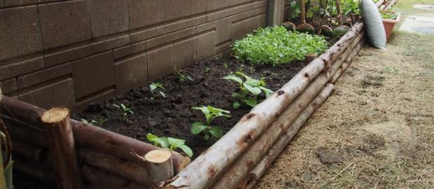 การจัดสวน,ปลูกผักสวนครัวในบ้าน,จัดสวน